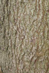 bark of common oak_2 by heyla-stock