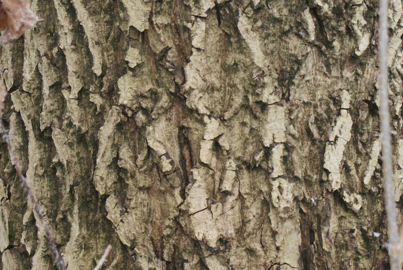 bark_2 by heyla-stock