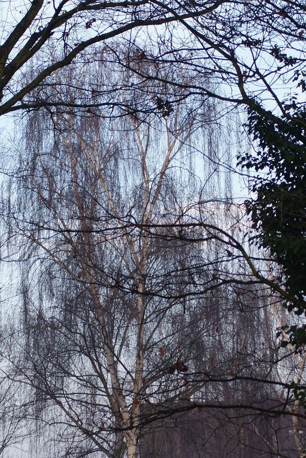 tree in trees by heyla-stock