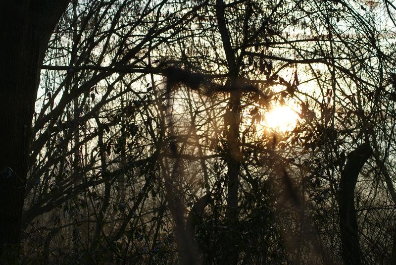 sun in trees by heyla-stock