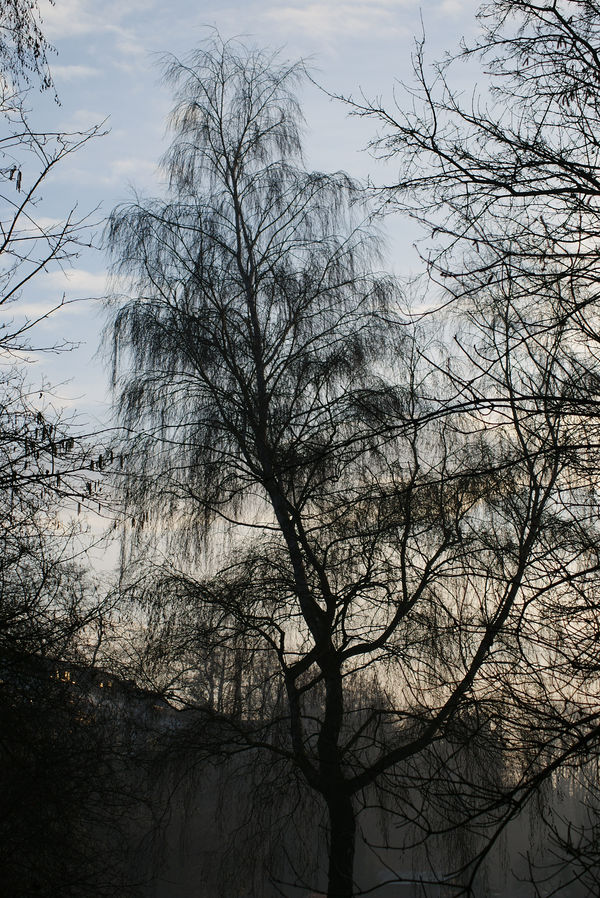 morning tree by heyla-stock