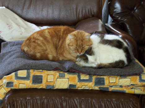 Bill and Frank sleeping