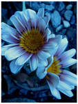 Love Flowers by Miandre