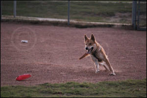 Mayla Frisbee Chasing by SMB-Photography