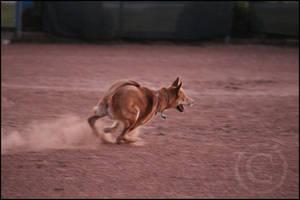Mayla Running Free by SMB-Photography