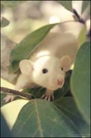 Tree Rat 9861 by SMB-Photography