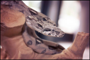Red Tail Boa by SMB-Photography