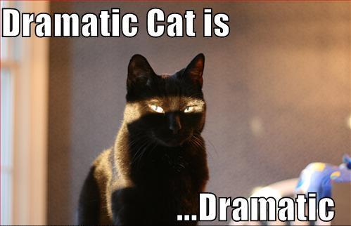 Dramatic Cat by sandleaf1