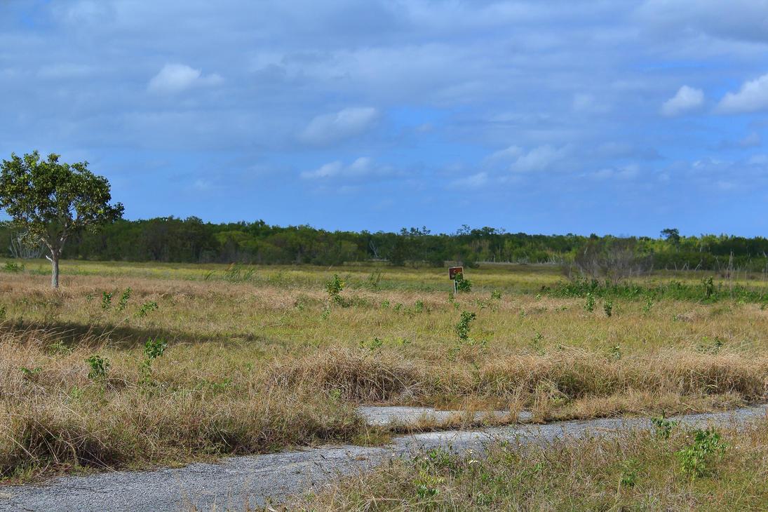 Florida S Natural Resources Prezi