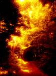 Phenos Forest by Nathetorsyn