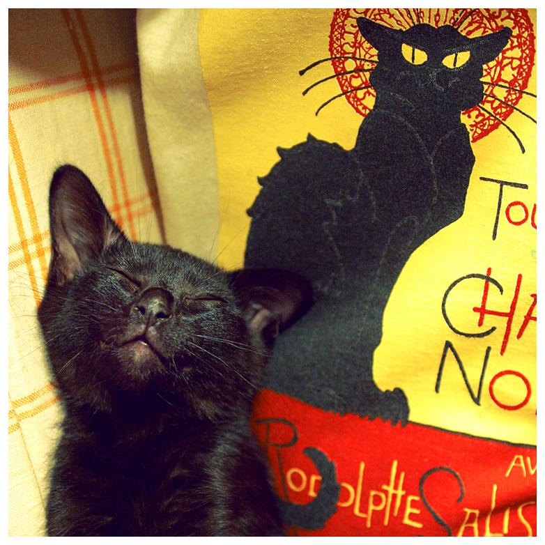 Gato Negro by sipsic