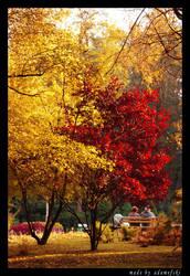 Autumn in park by adameFski