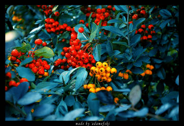Yellow - red by adameFski
