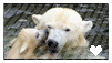 Polar bear stamp by Hippie30199-Adopts