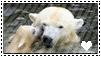 Polar bear stamp by Hippie30199-Adopts