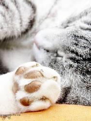 dirty paw
