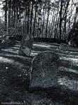 Old Forgotten Cemetery