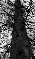Black Metal Forest by satanen