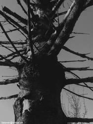 KVLT TREE by satanen