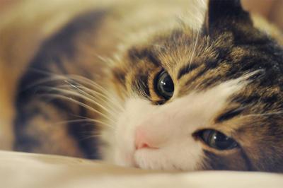 kitty by MysticQT