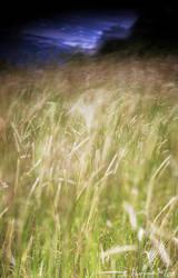 Mangup-Feather grass by kharlamov
