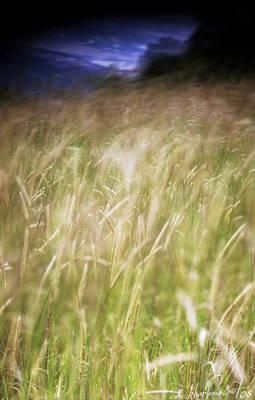 Mangup-Feather grass