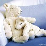 Bears by Puffy-diaNa