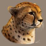 Sunset Cheetah