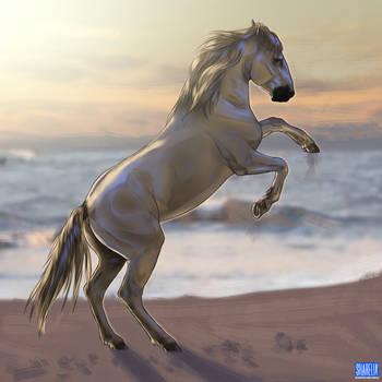 Camarque Horse