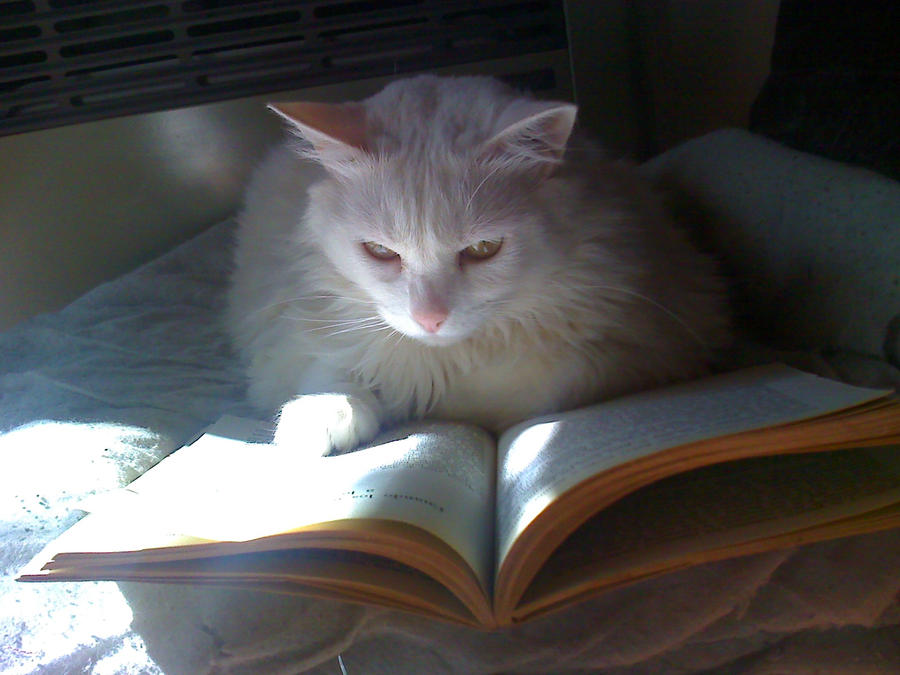 Kitty and the book
