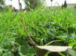 Grass by Kalosys-stock