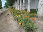 Orange flowers by Kalosys-stock