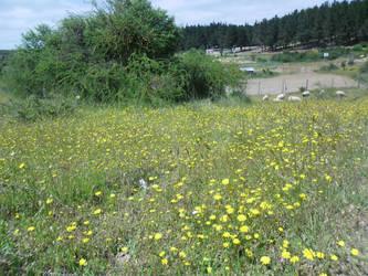 Flower field 3