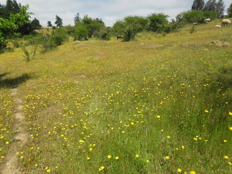 Flower field 4