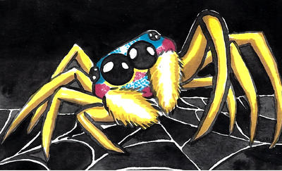 Yellow grass spider