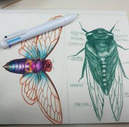 Cicada sketches