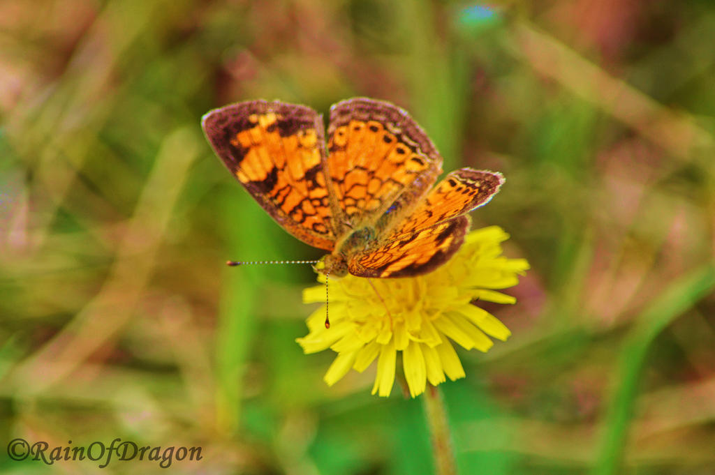 Little Orange by RainOfDragon