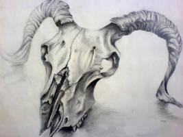 Sheep Skull Drawing by Louisa911