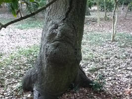 the tree with a face part 2 by Natefurry