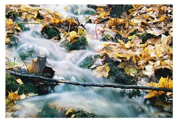 fall II by Edgars