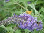 Itty-Bitty Butterfly