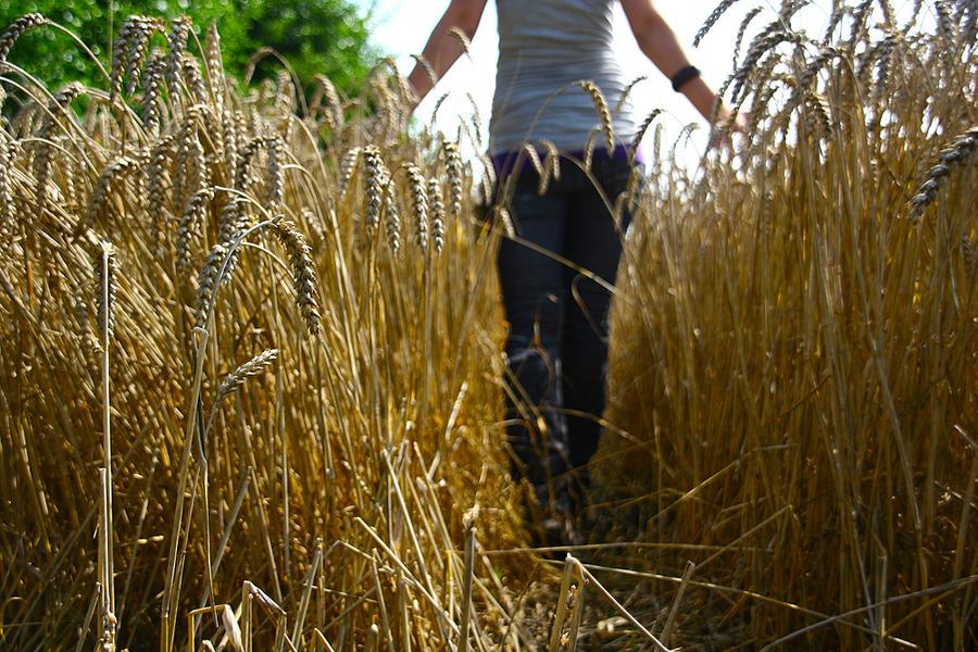 against the grain by Vlienster