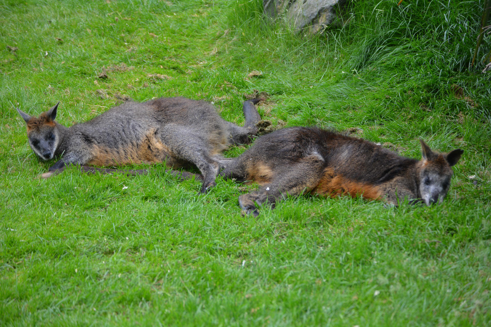 Two Lazy Walibi S Zoo Animals By Magicgirll91 On Deviantart