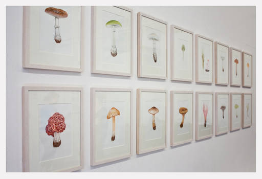 Deadly Fungi (exhibition)