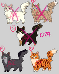 [2/5 OPEN] OTA Cat Adopts