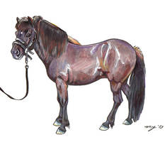 Icelandic Pony by Dustmeat