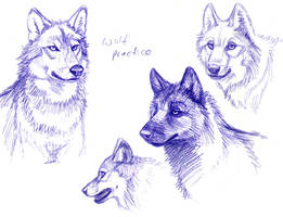 Wolf Practice by Dustmeat