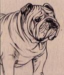 Old English Bulldog by Dustmeat