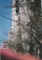 Branches blur