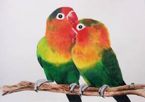 love birds by stephenkbrownart